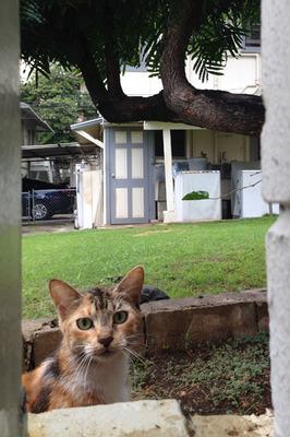 cats_030214-01.jpg