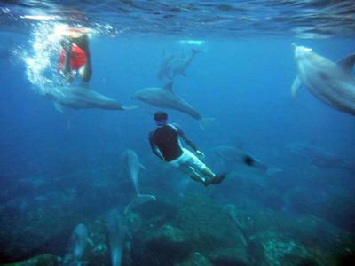 mikura_dolphin_swim_01.jpg