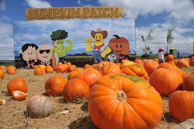 pumpkin_patch_102812-02.jpg