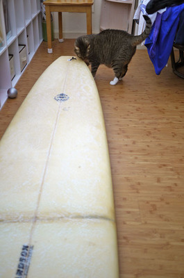 tora_and_surfboard_042812.jpg